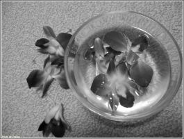 BW Orchids by Iuliaq