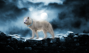 Wolf Shaman in the light of the Blue Moon by WaterSinger