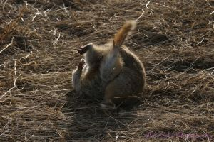 Gopher Fight IV by Kaptive8
