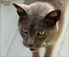 Meow by ILTBY