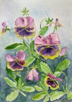 Pansy flowers by solgas