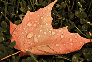Leaf by FOTOSHOPIC