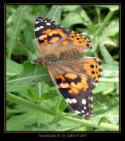 Painted Lady III 9890 by Eolhin