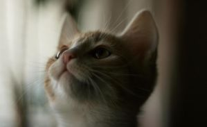 my cat 3 by 60002