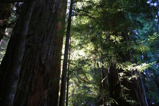 That Redwood Filter... by SmurfsOMalley