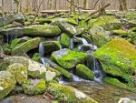 Mossy Stream by StockbyStrawberry