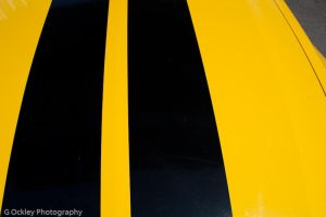 Racing Stripes by gockleyphotography