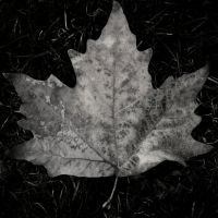 A Leaf Less Ordinary by Masisus