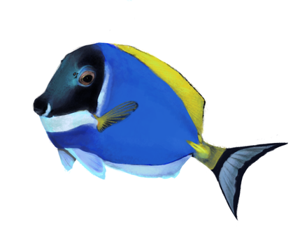 Powder Blue Tang by raisaoren