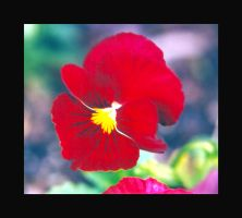 Red Flower by Curim