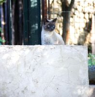 Le Chat2 by Flore-stock