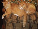 Miracle Joe Boots' backside is Scotty's pillow by MystMoonstruck