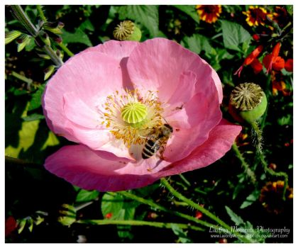 Pink Flower by LastingMomentsPhotos
