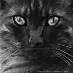 Portrait of a cat, 2, bw vers. by Midiesis