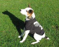 Halloween Terrier by DigiPhotography