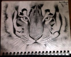 Tiger by Annaria17