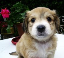 one of my beloved puppies by Laysa