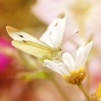chasing butterflies by ivadesign