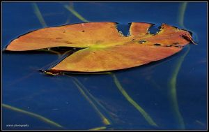 Floating as it Ends by Arawn-Photography