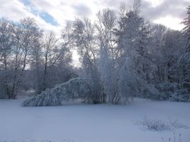 Snow Covered Trees 11 by TheGreatWiseAss