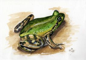 Frog by Giudy-chan