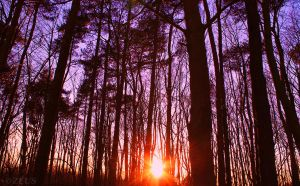 Evening in the Forest. by ZEUS1001