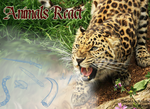 Animals React - Banner by Nakouwolf
