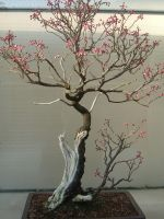 Bonsai 015 by aurochstock
