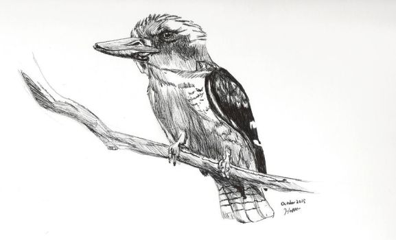 Day 2: Laugh Kookaburra Laugh by zerioni