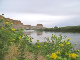 Yellow Thistles-Green River-WY-8-13-14 by Leannnorrisbond