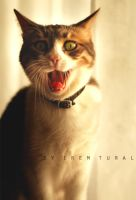 Gumusmycat_3 by iremtural