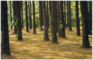 Forest of Josh by fallingskies