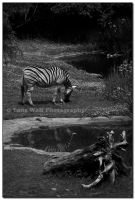 Black and White x 3 - I by LoneWolfPhotography