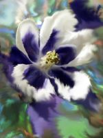 Aquilegia by iriscup