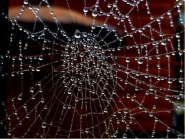 Spider's Web by RachelLou96