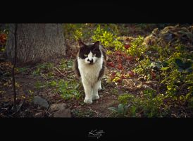cat by KittyStrife