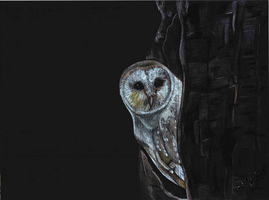 Owl by primalaspects