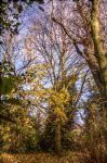 The Last Leaves of Autumn HDR by johnwaymont