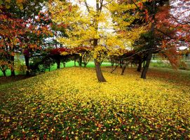Yellow fall by safork