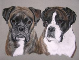 Two dogs by mo62