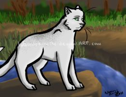 Shellheart of RiverClan by Teahorse