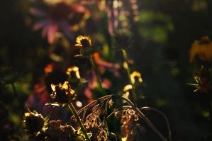 Sun drenched garden by LulledAwake