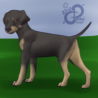 Skal: Puppy Profile by PaintedCricket