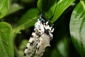 Hanging On by Dramier