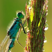 detail of a damselfly by indojo