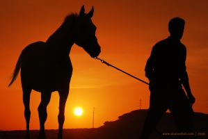 Horse and man by alwahab