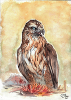 The Brown Buzzard by Heyriel