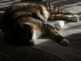 Cat's dream by MArt120