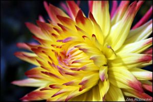 Floral Flame . by 999999999a