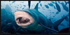 JAWS by Vitaly-Sokol